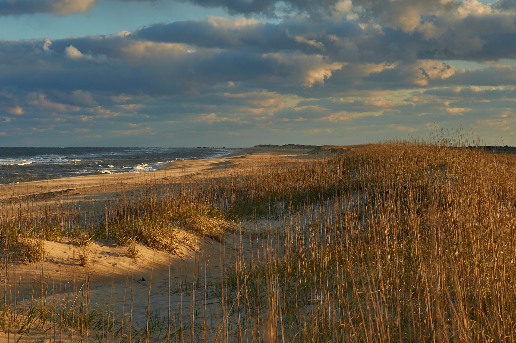 A photograph of Cape Hatteras National Seashore in golden light at sunset. Tan and brown sea oats and sand are in the foreground. The teal ocean is in the background. White puffy clouds dot the blue sky above.